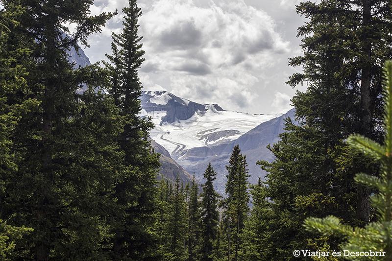 Peyto Glacier