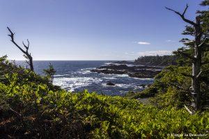 Isla de Vancouver: Cathedral Grove, Ucluelet y el Wild Pacific Trail