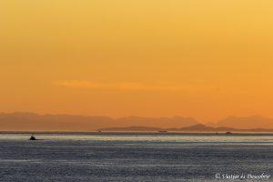 Excursión para ver ballenas en Telegraph Cove