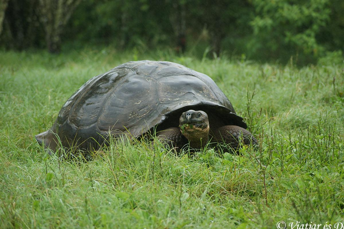 tortugas islas galapagos