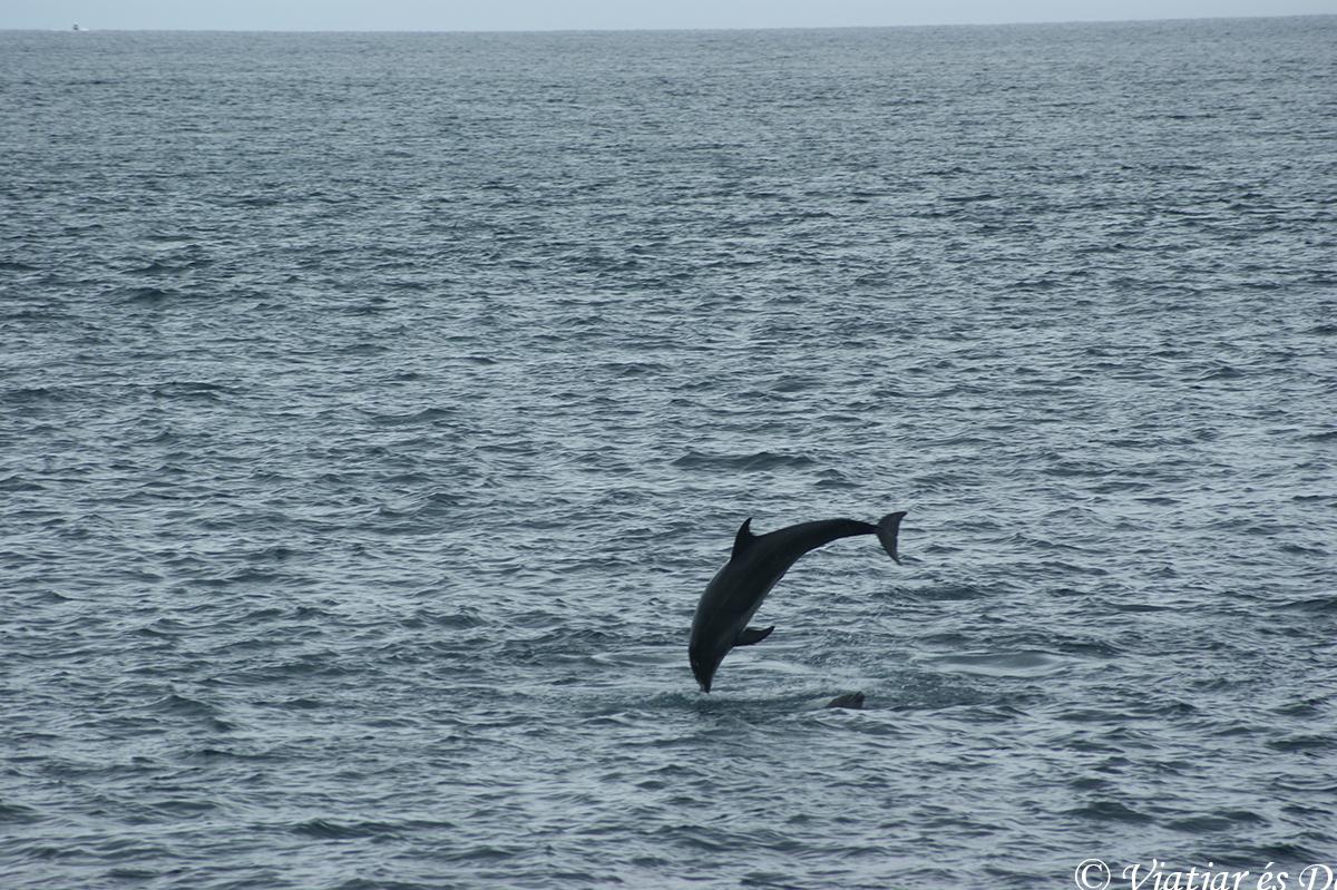 delfines en las islas galapagos