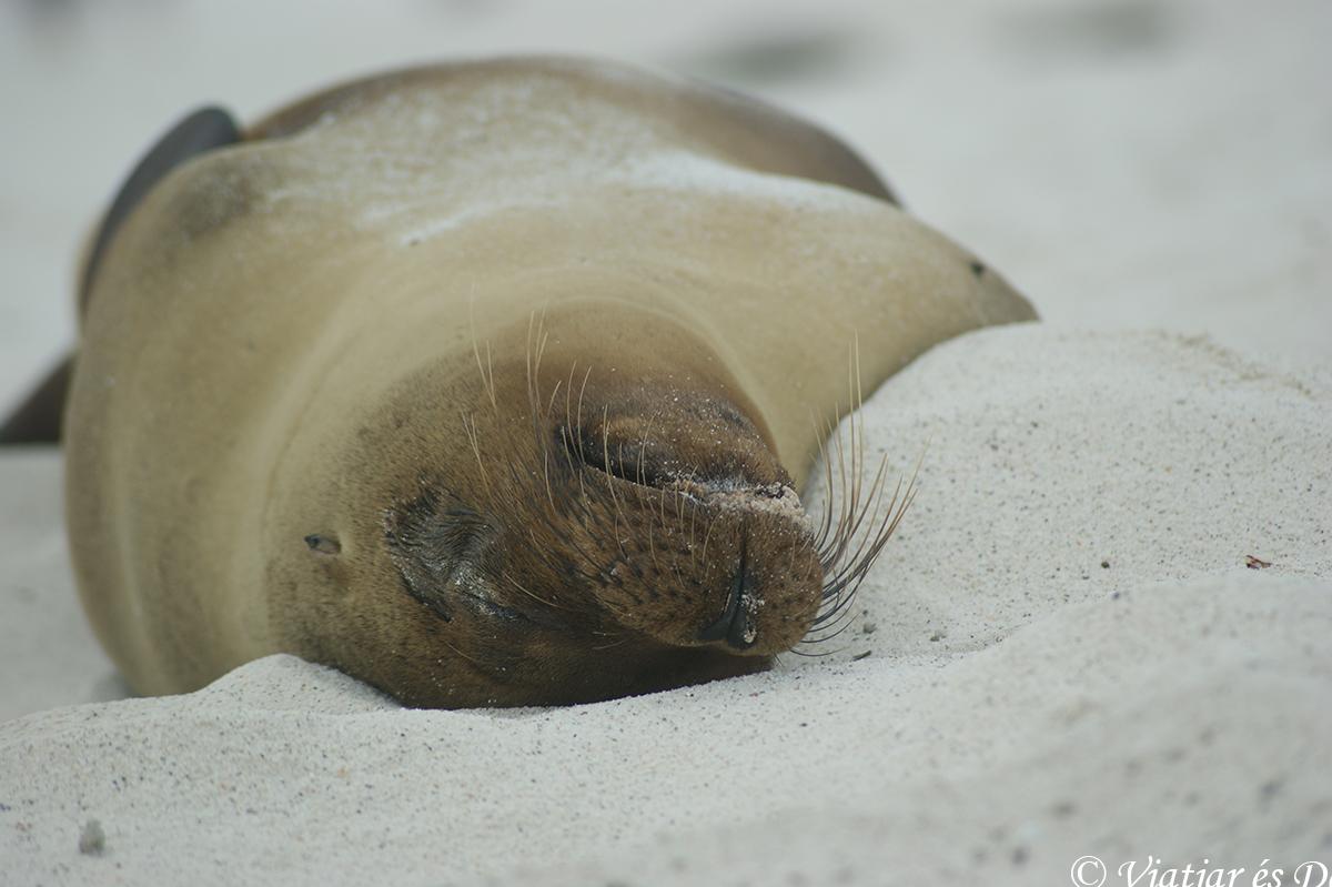 leon marino en Bahía Gardner