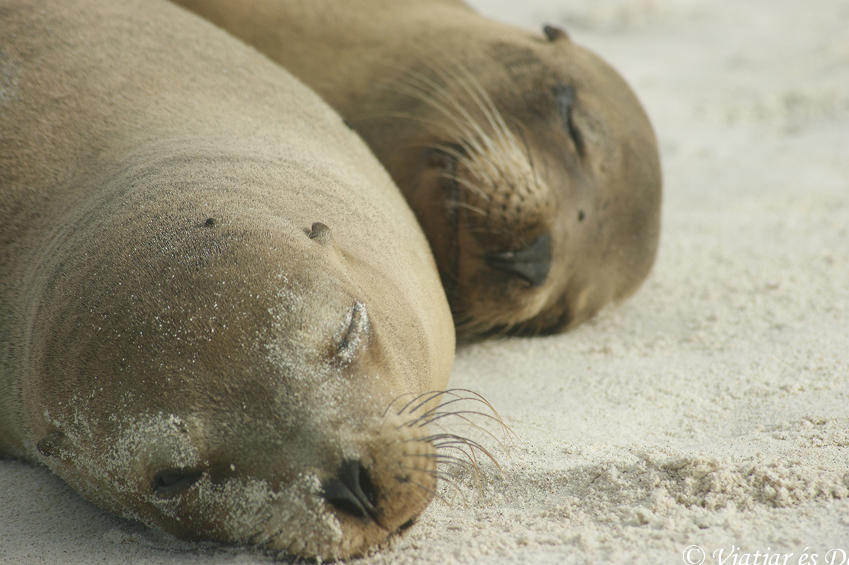 leon marino playa islas galapagos