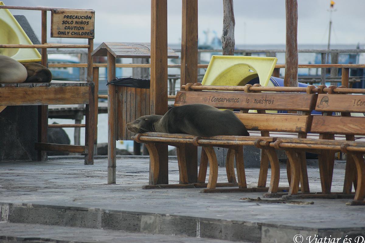 leon marino banco islas galapagos