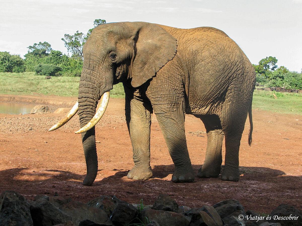 elefantes en el aberdares en kenia