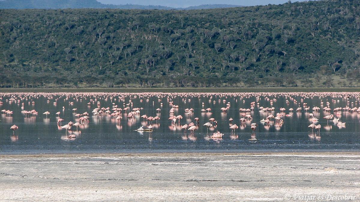 el lago nakuru en kenya