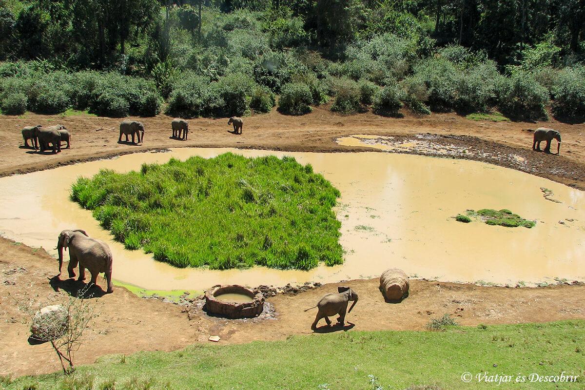 safari en aberdares en kenia
