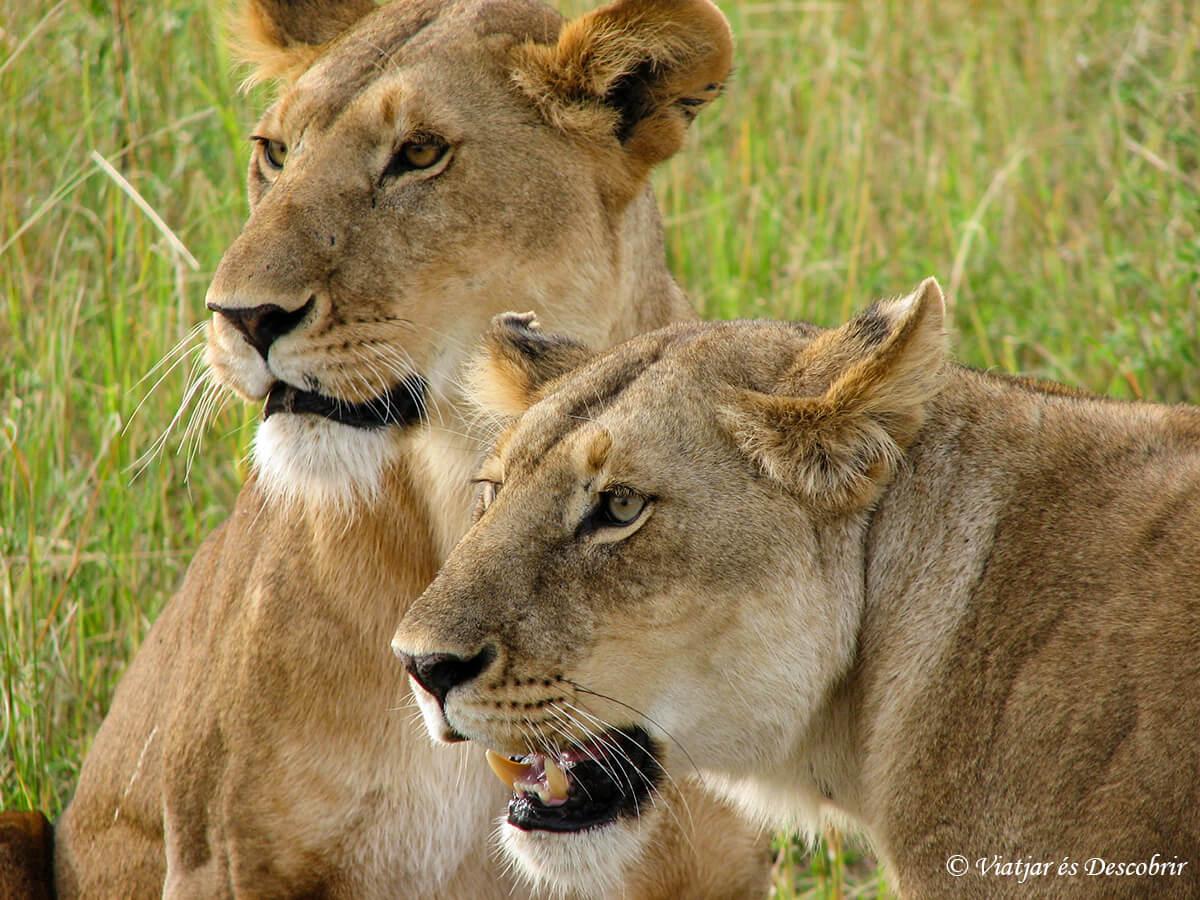 10 postales de un safari en Kenia
