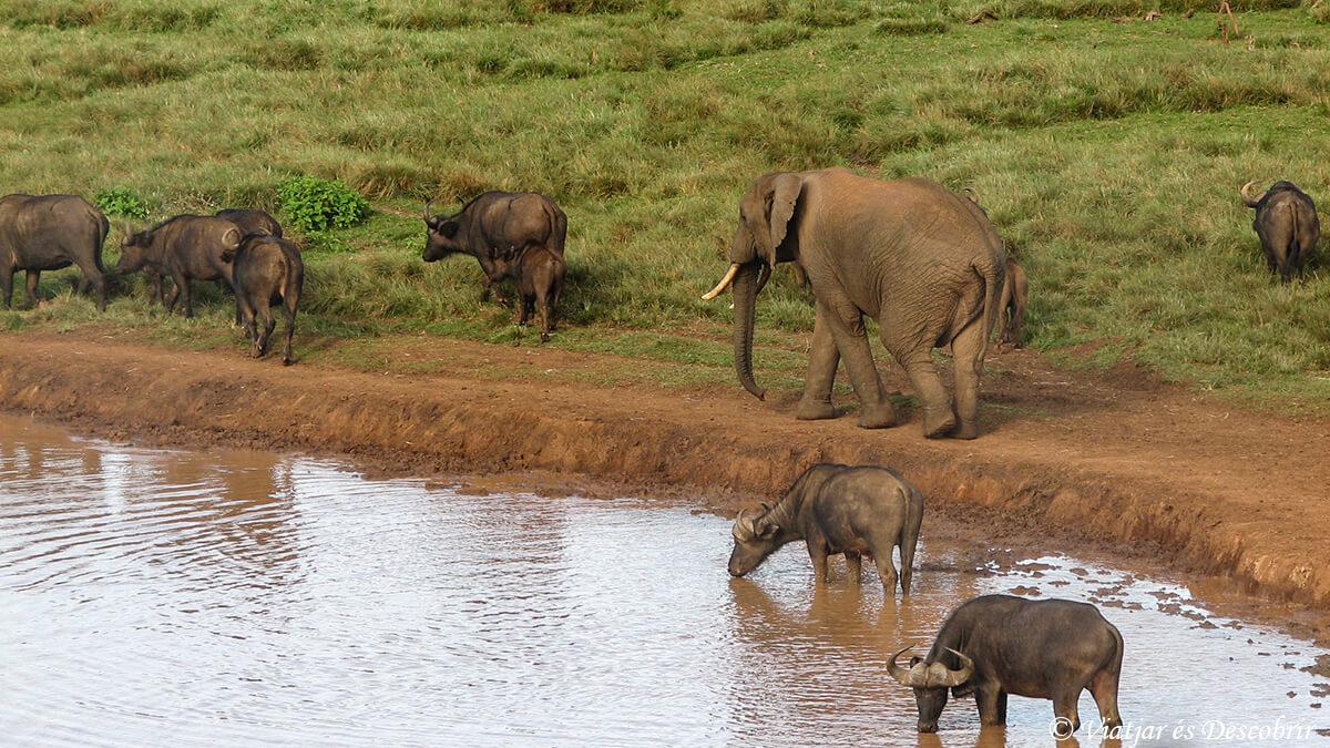 safari en kenia elefantes y bufales en el aberdares