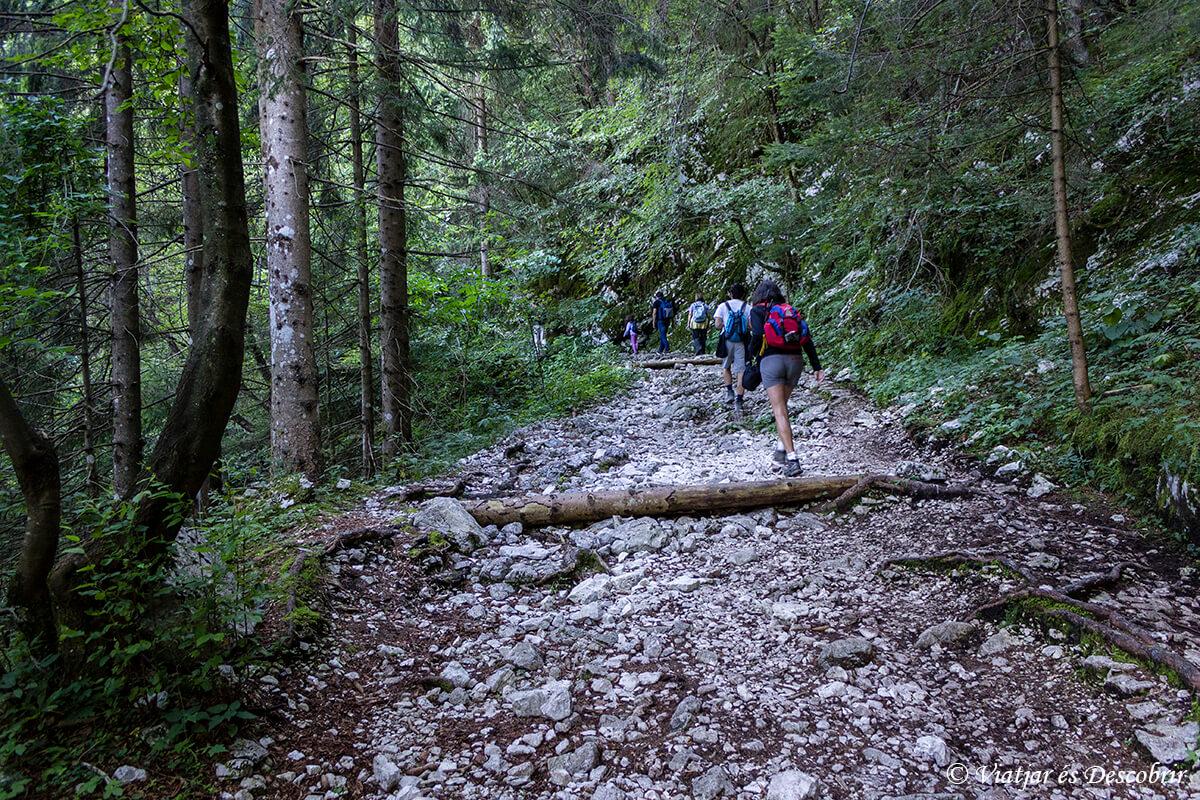 excursion cerca de Tolmin en el parque nacional triglav