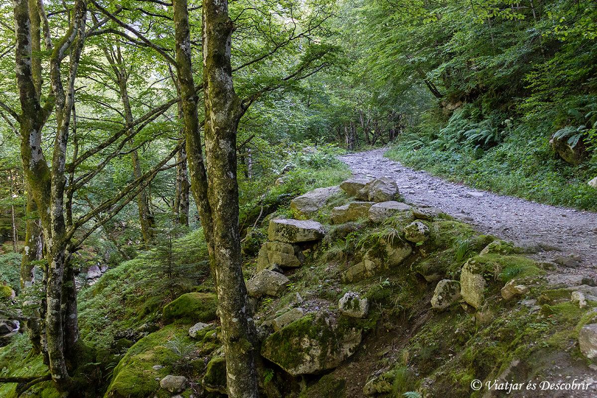 bosque atlantico en la parte francesa de los pirineos