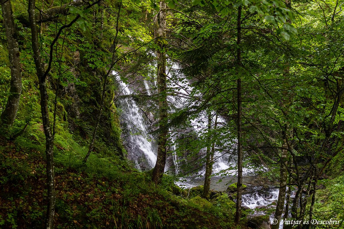 cascada en el bosque atlantico de los pirineos franceses