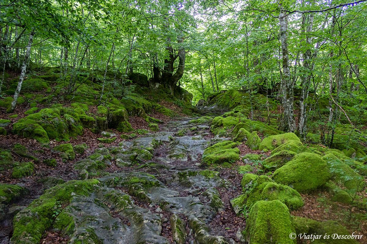 bosques durante el trekking de mutanyes de llibertat