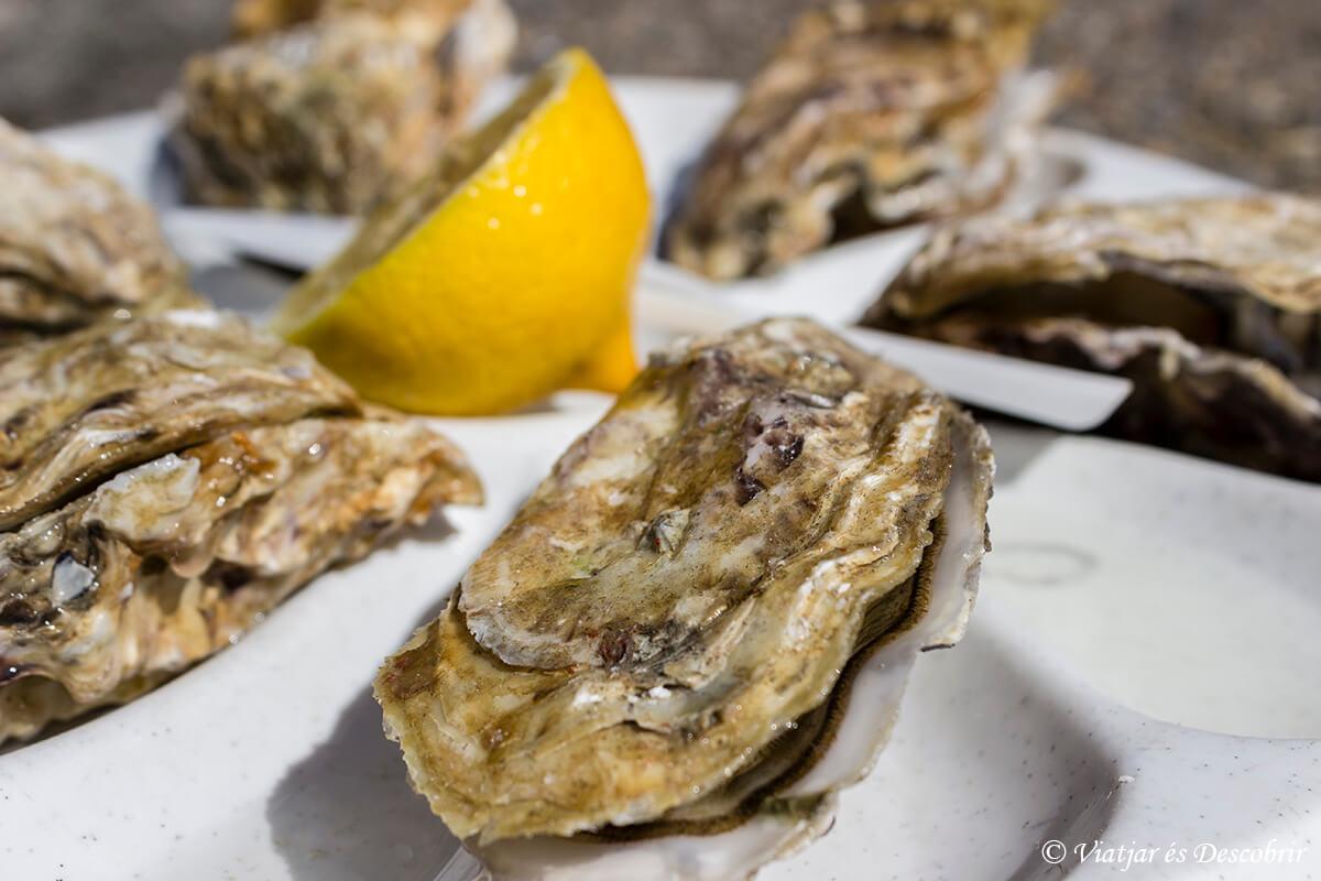un plato con las famosas ostras de cancale en la bretaña francesa