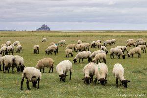 Qué ver en la Bretaña Francesa: 10 razones para visitar esta región