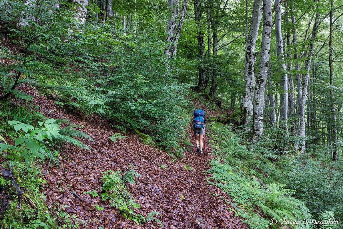 hayedo en los pirineos franceses durante muntanyes de llibertat