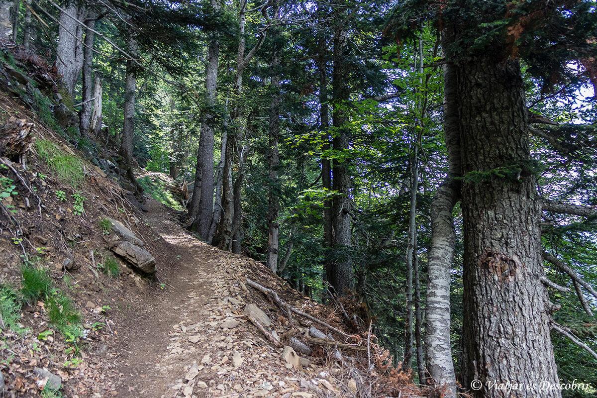bosque de la senda de los cazadores en ordesa y monte perdido