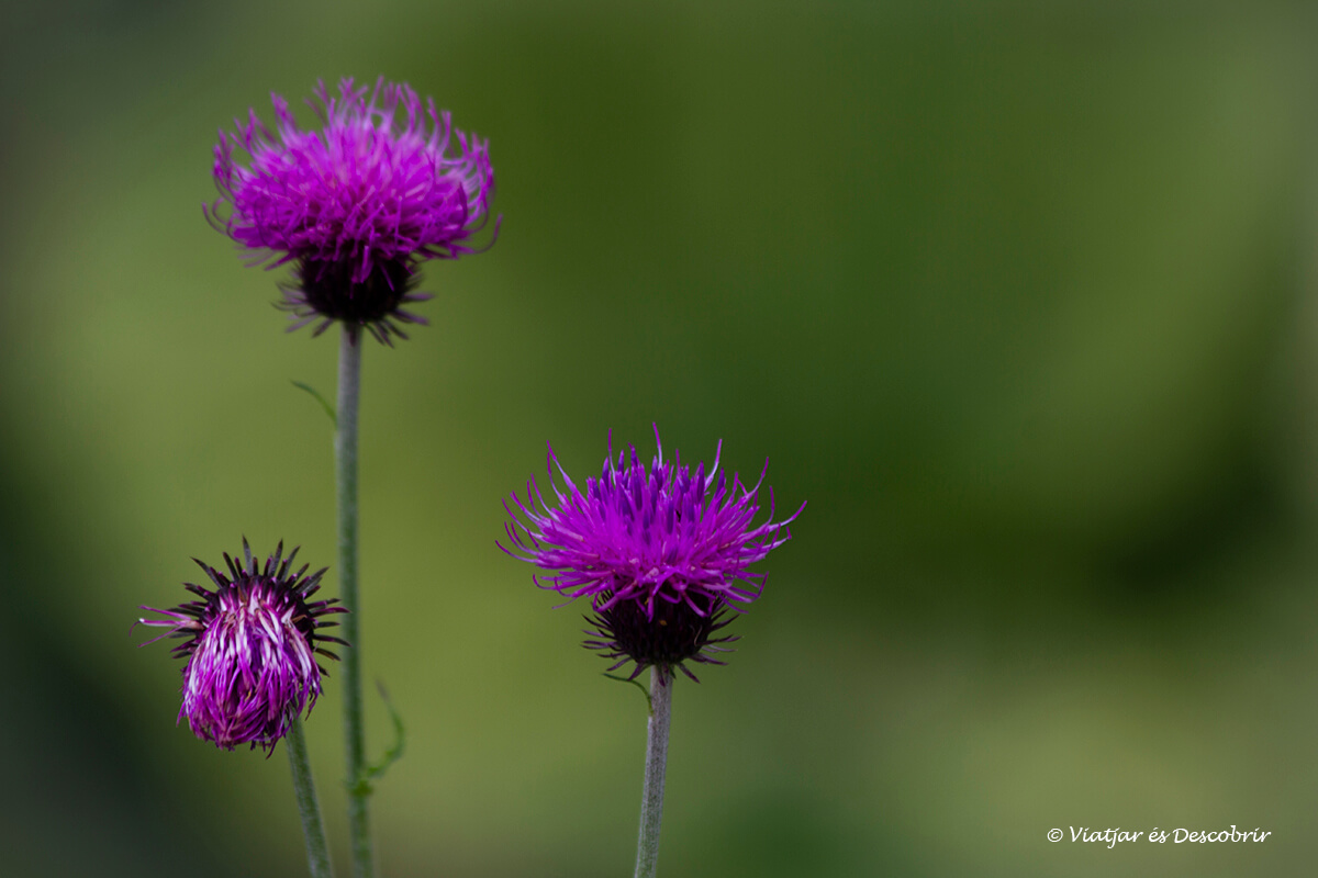 flores durante las excuriones en eslovenia