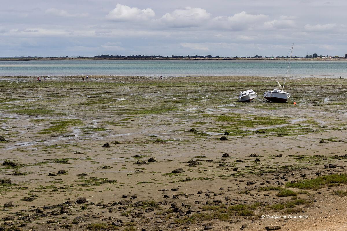 marea baja en el litoral de la isla de normantier en bicicleta