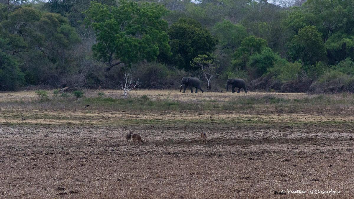 elefantes en la entrada del parque nacional wilpattu