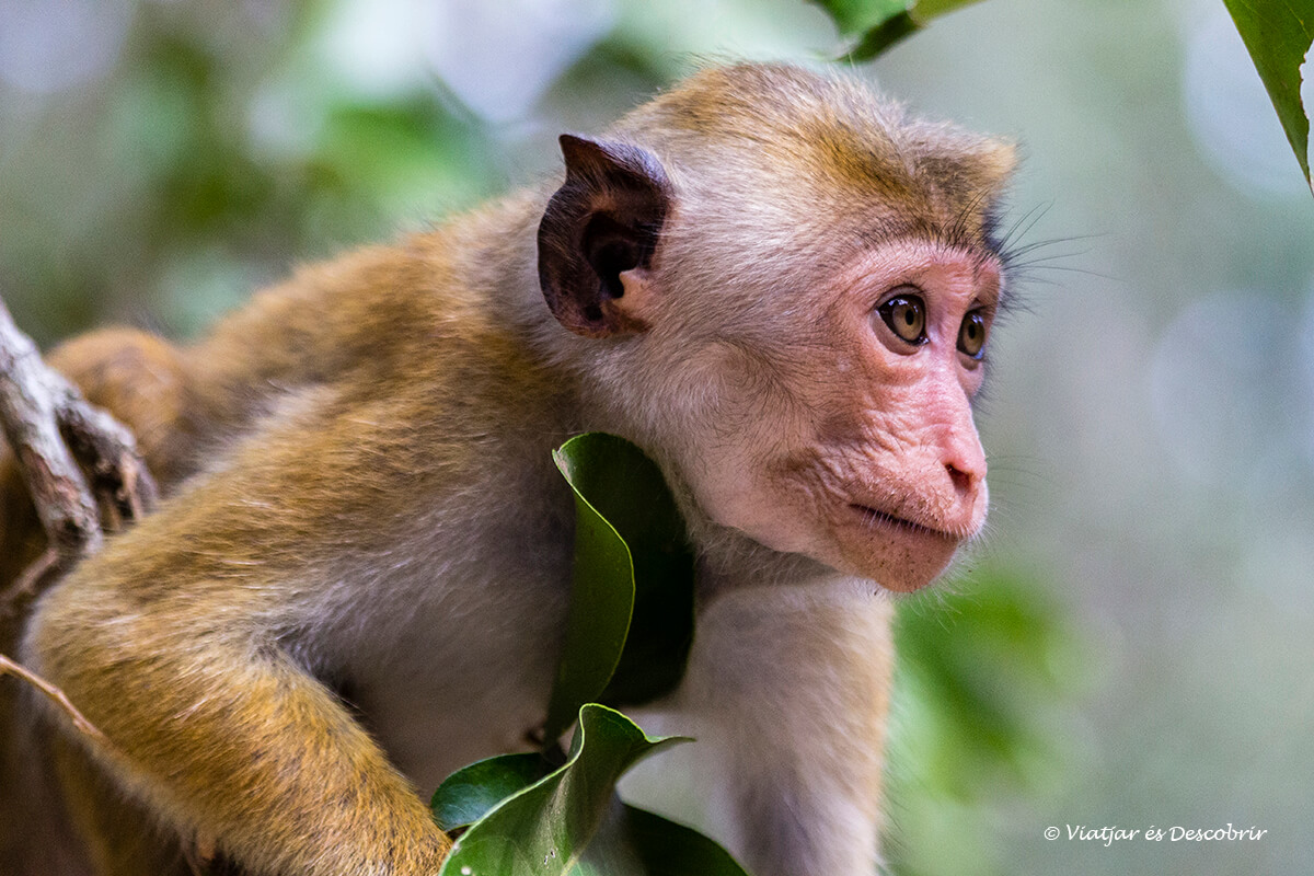Guia para organizar un safari al Parque Nacional Wilpattu