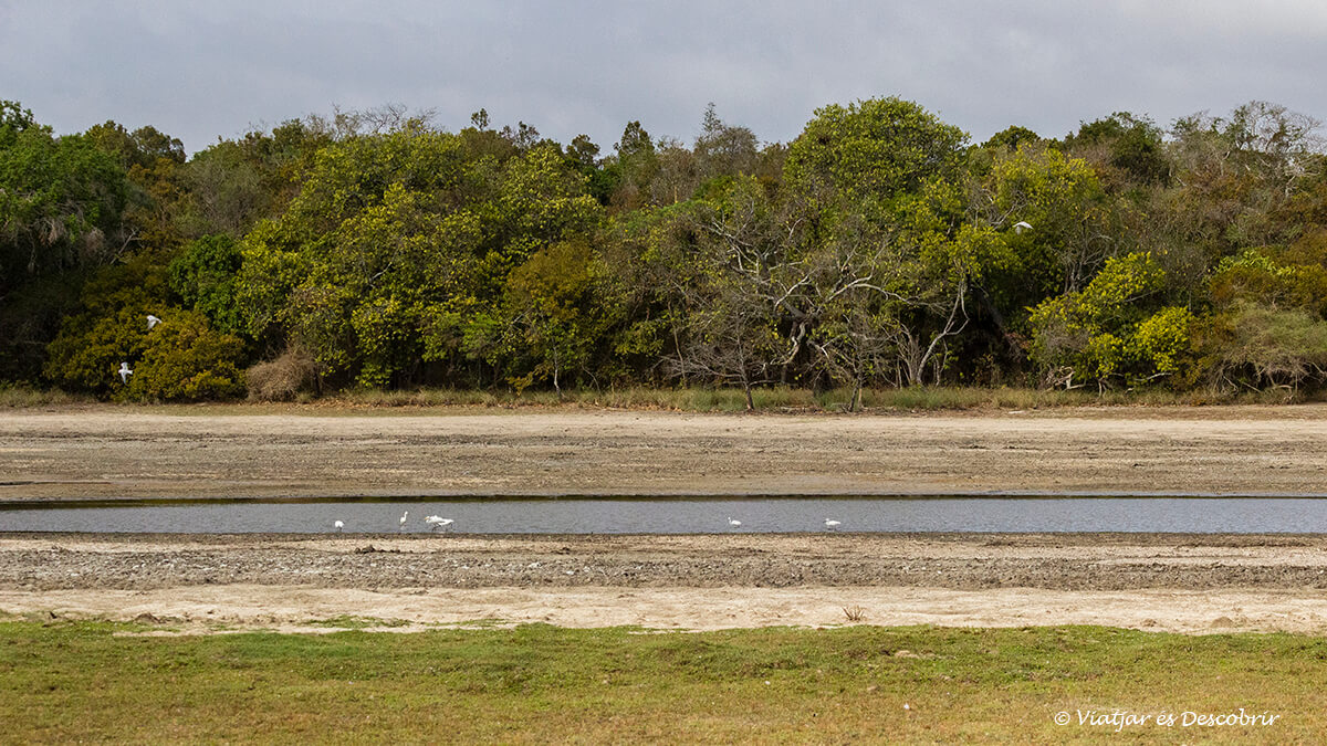 los lagos dibujan el paisaje del parque nacional wilpattu