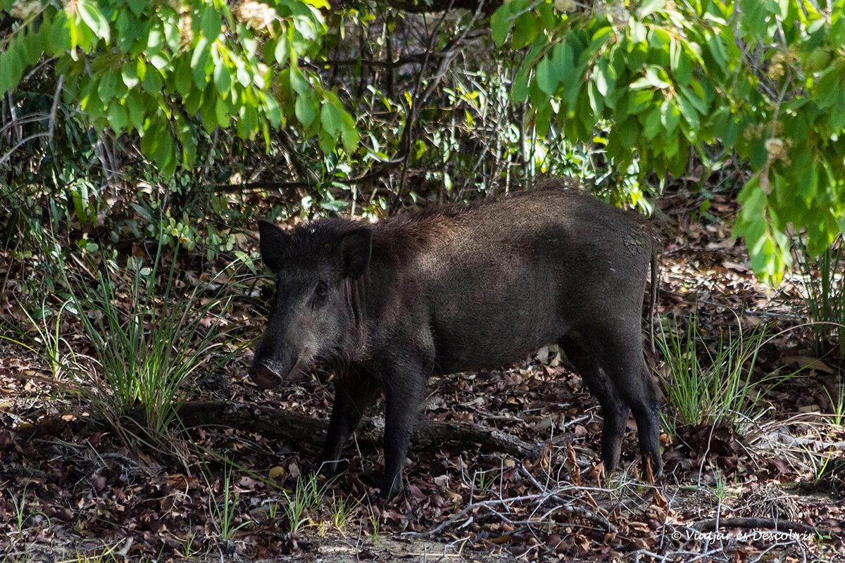 fauna durante un safari en el parque nacional wilpattu