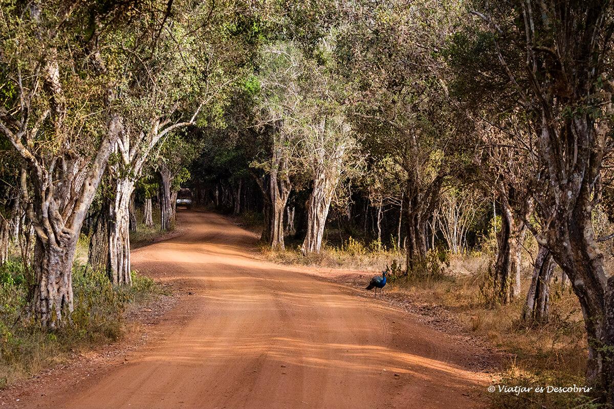 camino safari wilpattu