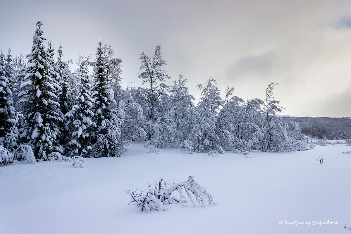 paisaje blanco y nevado en el final de viaje a las islas lofoten y la isla de senja