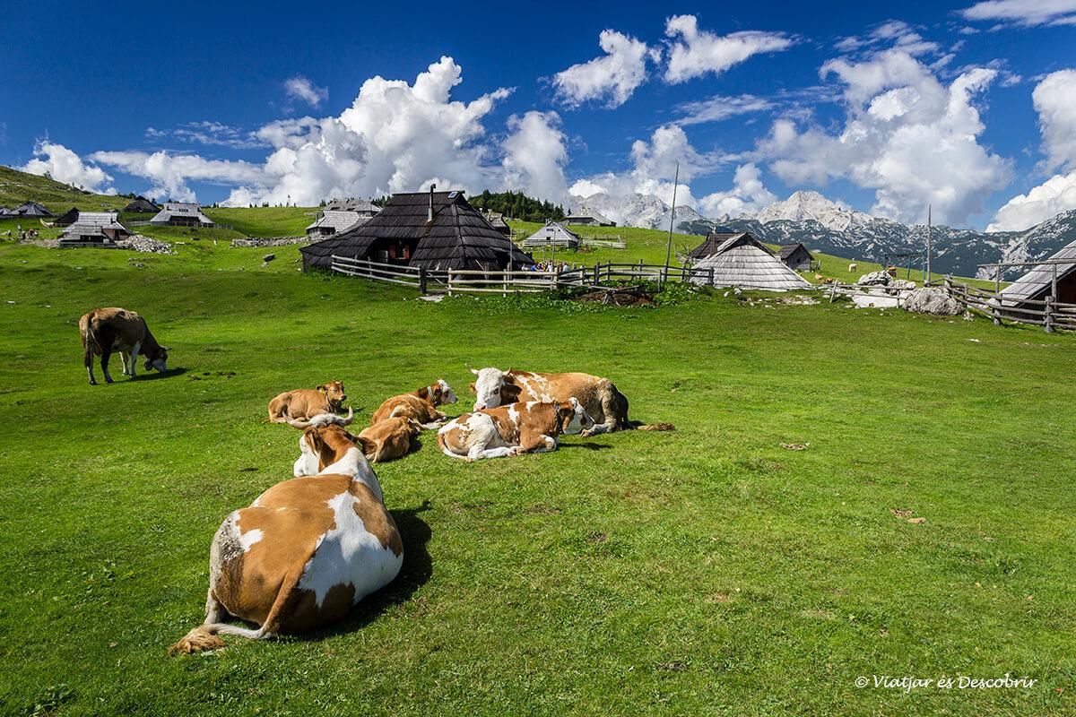 Velika Planina, los prados alpinos más famosos de Eslovenia