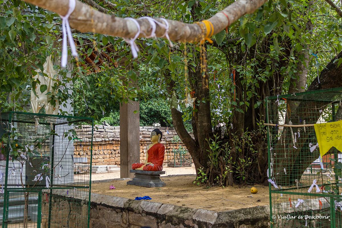 arboles sagrados con buda en la ciudad sagrada de anuradhapura