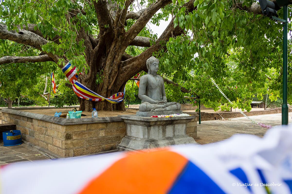 estatua sagrada de buda en sri lanka