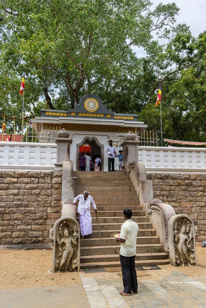peregrinos agrupados en el arbol de buda de anuradhapura en sri lanka