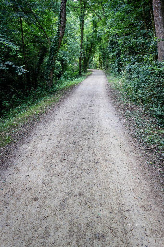 carril bici por la bretaña francesa en el interior de un bosque