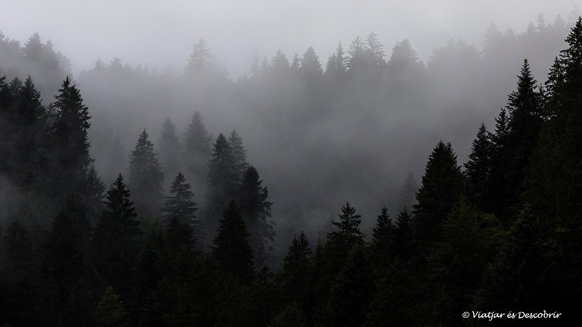 niebla entre los arboles en eslovenia cerca de la frontera con austria