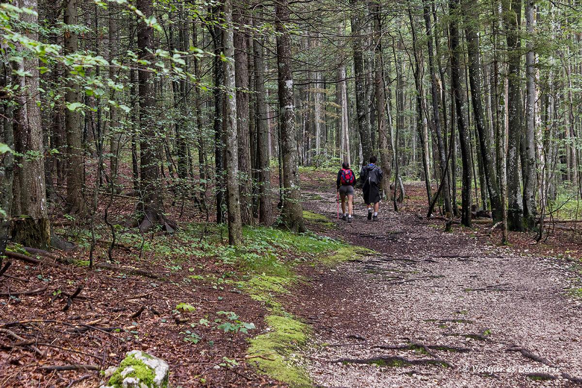 excursion por el bosque de logarska dolina durante el viaje a eslovenia