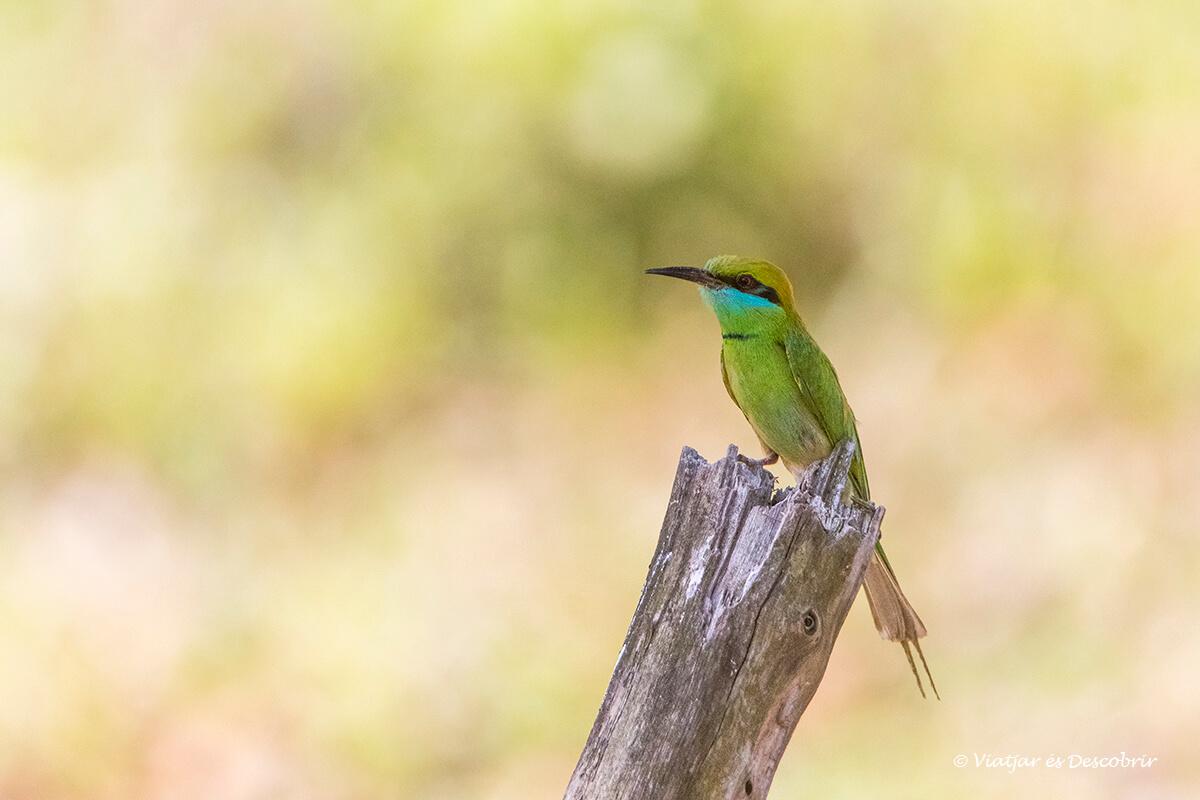 un bonito pájaro en una reserva en el viaje a india