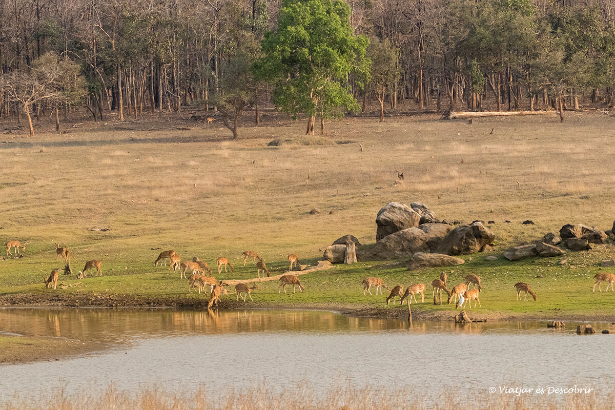 los paisajes de los safaris del viaje a la india son sorprendentes