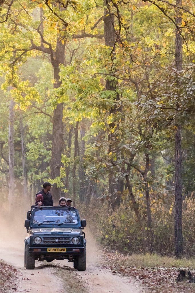 los safaris en india ofrecen muchas posibilidades de ver fauna