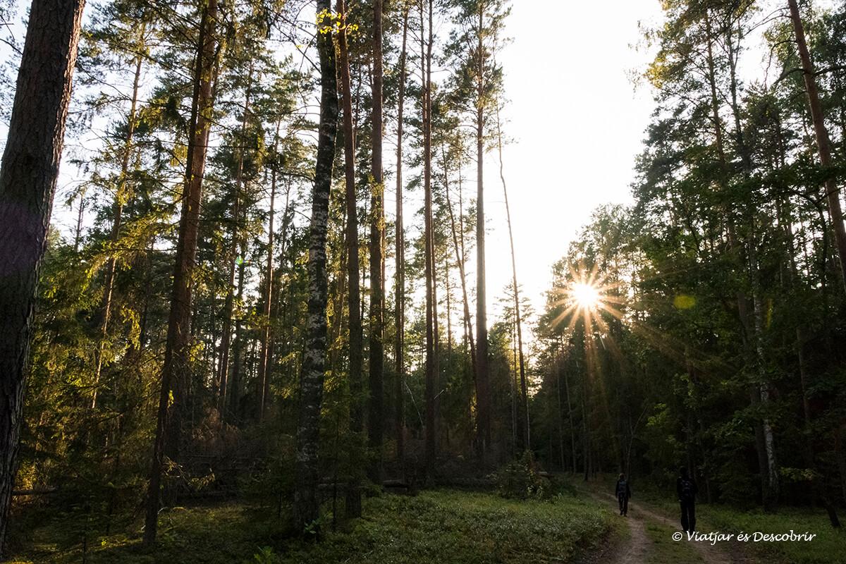 bosques del parque nacional Bialowieza en el viaje a polonia