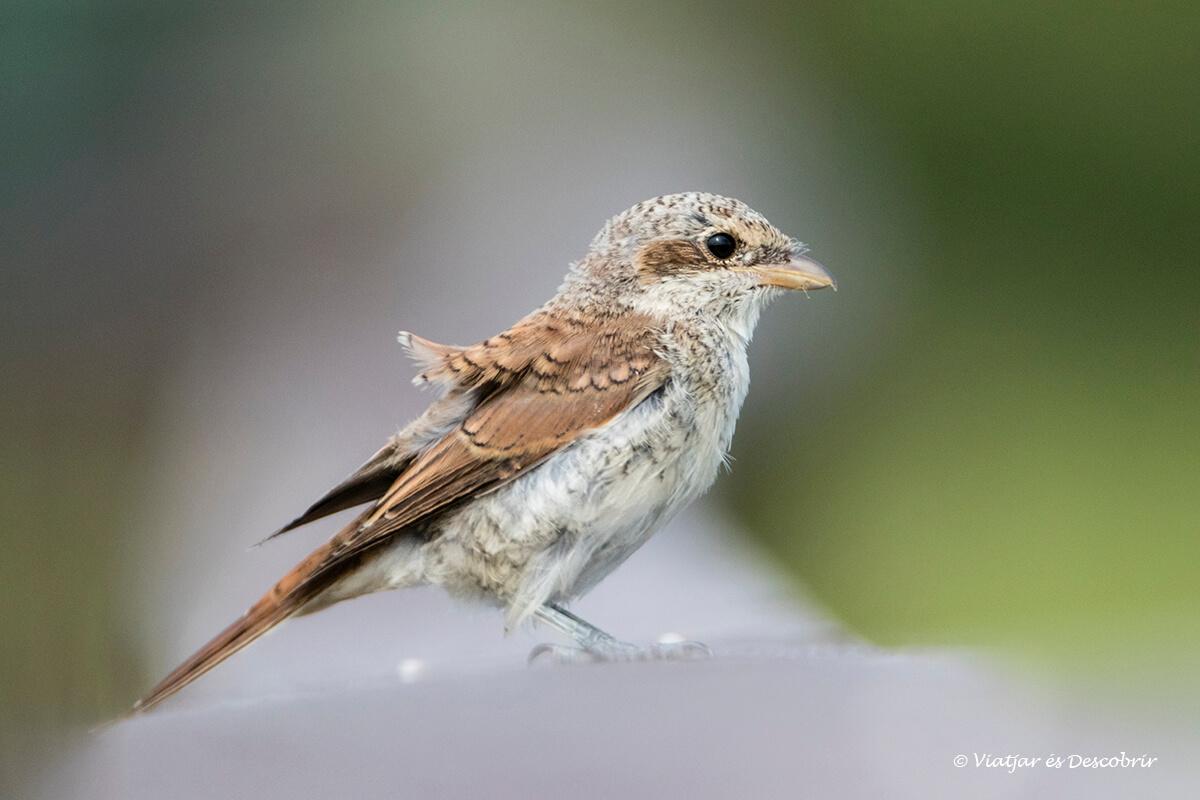 pájaro en el parque nacional Narew