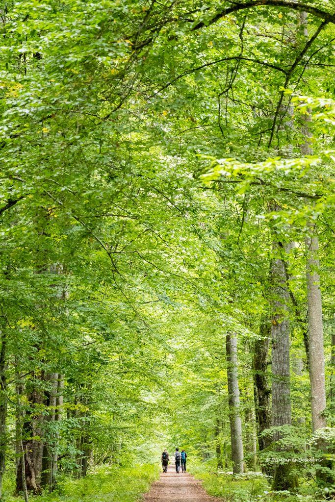 caminando por el bosque restringido de polonia