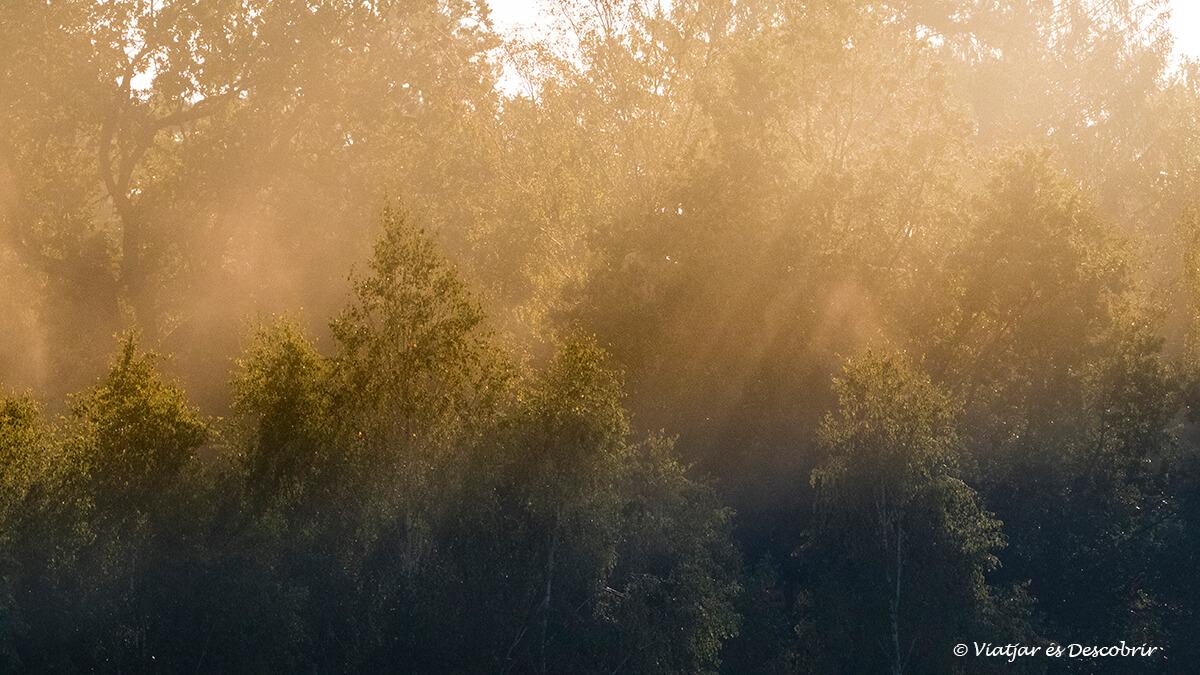 salida de sol en los bosques de bialowieza