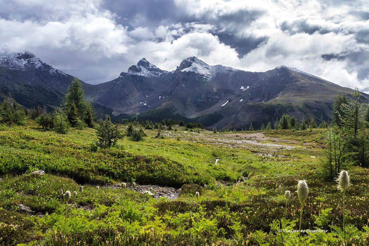 vistas que ver en banff a lo largo de la excursion de sunshine meadows