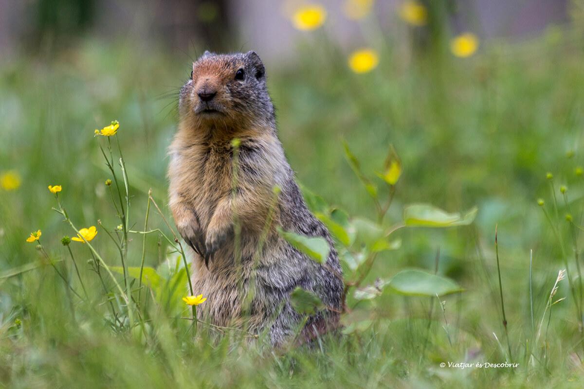 animales que ver en el parque nacional banff en verano