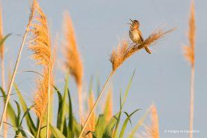 10 Consejos para fotografiar animales salvajes