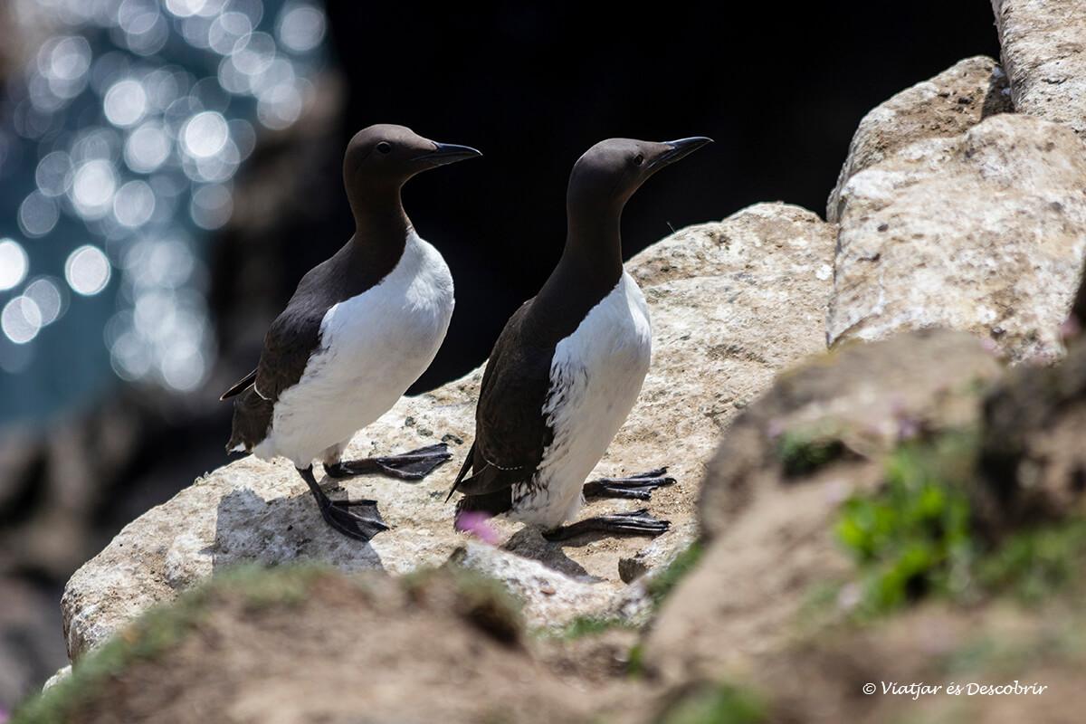 las islas saltee es un refugio de aves marinas en irlanda impresionante