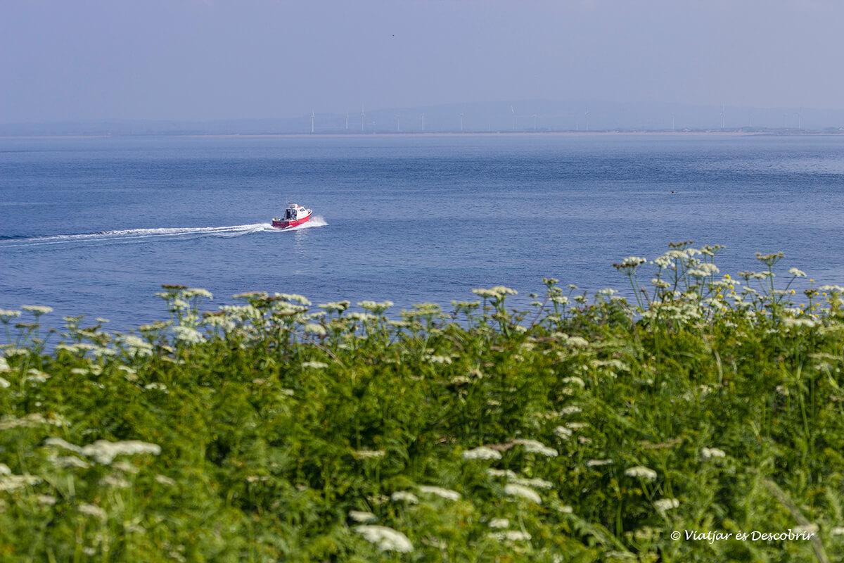 barco hacia las islas saltee para ver frailecillos en irlanda