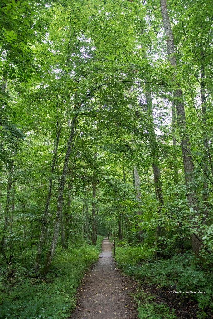 un camino de las mejores excursiones en Bialowieza