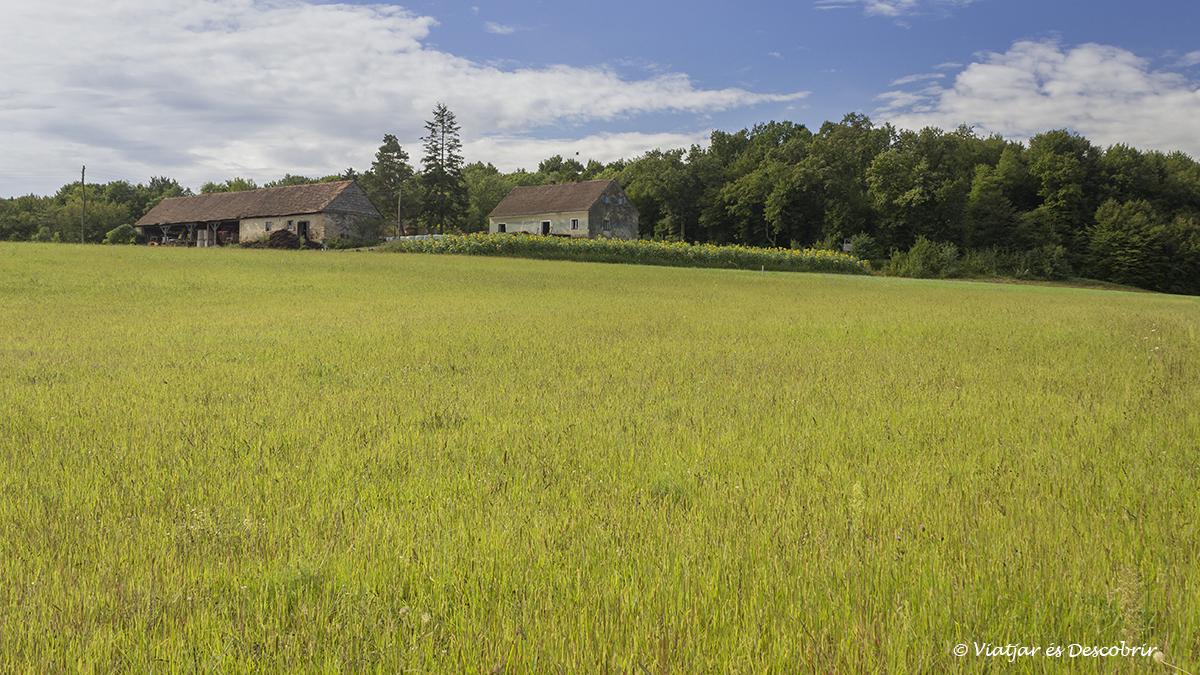 campo de cultivo solitario en los slovenian hills